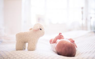An image of Jasper with his cuddly sheep - newborn photography by Sam of Hansford Carter, a Kent wedding photographer